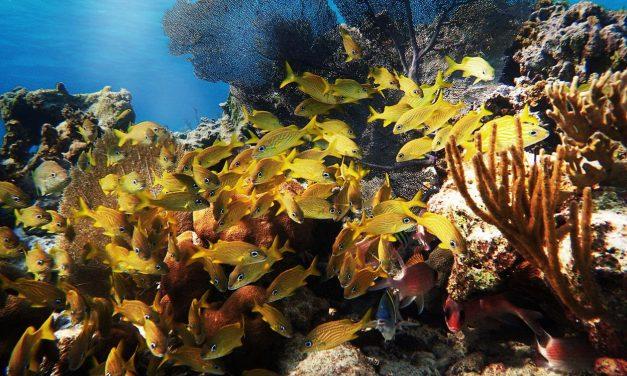Marine Animals in Spotlight this World Wildlife Day