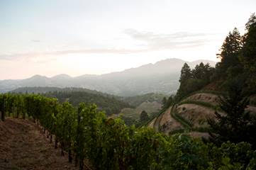 Discover Stags Leap – Napa's Neighborhood Escape to World-Class Wine and Food