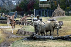 Elephants Photo: The Dallas Zoo