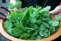Peas for Snap Pea, Almond and Feta Salad Photo: Elizabeth Poisson