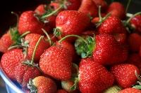 Strawberries  Photo by Elizabeth Poisson